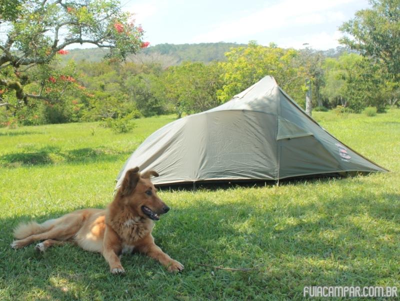 Cachorros nos Campings